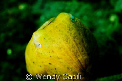 A cute cuttlefish shot under the dock. Taken with NikonD8... by Wendy Capili 